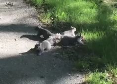 4 Baby Squirrels Get Tails Entangled in Bizarre Video (Here's How)