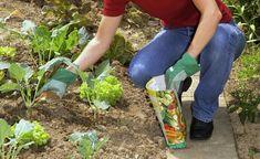 Gemüsegarten organisch düngen