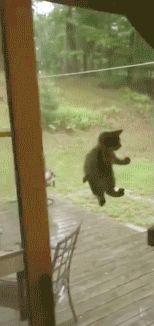 Spider Cat,Spider cat macht was immer eine Spider cat macht