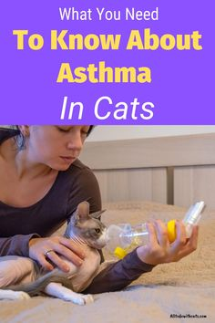 Discover everything you need to know about asthma in cats including symptoms, treatments and caring for your asthmatic kitty. #aboutasthmaincats #asthmaincats #felineasthma #catasthma #cathealthproblems Cat Health, Health Tips, Health Care, Cat Asthma, Cystitis, Health Problems, Health Remedies, Allergies, Need To Know