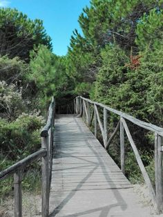 Il Giardino Botanico di Porto Caleri (Rosolina, Italy): Top Tips Before You Go - TripAdvisor