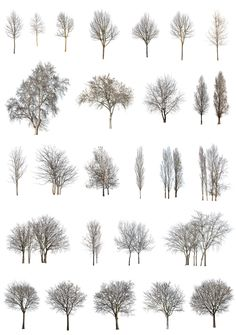 Cutout-trees png winter pack Cut out tree Coupes Architecture, Collage Architecture, Architecture Graphics, Architecture Drawings, Landscape Architecture, Landscape Design, Rendering Architecture, Architecture Diagrams, Victorian Architecture