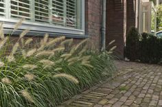 Jaren30woningen.nl | Detail van een voortuin van een #jaren30 woning Dutch Gardens, Small Gardens, Rooftop Garden, Balcony Garden, Amazing Gardens, Beautiful Gardens, Landscape Design, Garden Design, Night Garden