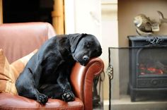 A black puppy sleeping on a leather chair near a fire.