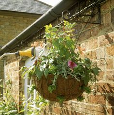 The 5 Secrets For Success With Hanging Baskets – Feed and Water Them Well
