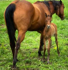 This mare's first baby!  We still have the baby.