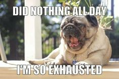 As a Pug Mom, and someone with chronic fatigue and chronic pain, I completely relate to this.