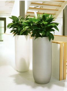Matching planters in different colours. A nice affect! See more at www.greendesign.com.au