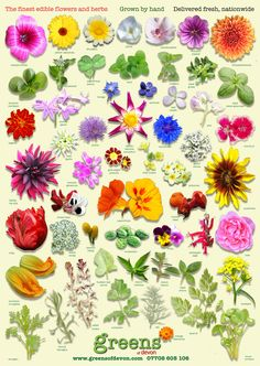 beautiful all new poster from greens of devon - edible flower identifier, free with every order placed with us this season, perfect for your kitchen wall!