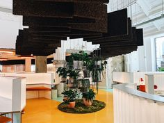 Cork panels suspended from the ceiling help with the acoustics and, along with the plants, give the room a more organic feel. Cork Panels, Indoor Slides, Architects London, London Fields, Campus Style, London Architecture, Architecture Today, Roof Architecture, Leafy Plants