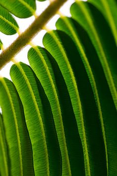 Fern frond macro photo - color, pattern, texture inspiration