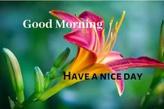 A collection of Beautiful Good Morning Images, beautiful good morning pictures, whatsapp good morning images and quotes. Sweet Good Morning Images, Morning Images In Hindi, Funny Good Morning Messages, Good Morning Picture, Morning Pictures, Good Morning Animation, Friends Image, Happy Birthday Images, Cool Baby Stuff