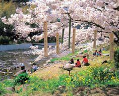 Um passeio pela primavera japonesa .: Turismo Japão :. NippoBrasil