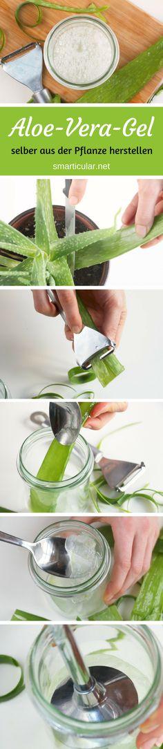 Statt Aloe vera in Form teuren Cremes aus der Drogerie zu nutzen, kannst du das heilsame Gel ganz einfach selbst aus der Pflanze herstellen.