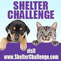 Join us on the Shelter Challenge! Become a supporter of Collin County Animal Services and vote for us everyday! Help us win $10,000 for the animals at CCAS