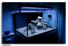 JP's Standard Issue Tank thread - Page 28 - Aquarium Journals - Nano-Reef Community Aquarium Rocks, Aquarium Setup, Marine Aquarium, Reef Aquarium, Live Aquarium, Aquarium Ideas, Saltwater Tank, Saltwater Aquarium, Freshwater Aquarium