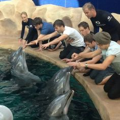 awh they are all being nice to the dolphins and then Louis just decides to scare the dolphin hilarious