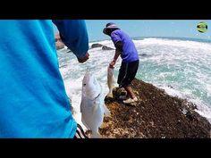 Como Pescar Corvina Grande - Pesca de Corvinas