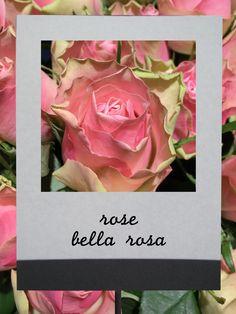 バラ (ベラローザ) #flower #shop #matilda #中目黒