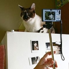 10 Tips for Getting Great Photos of Your Cat | Catster