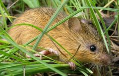 To Kill a Mouse: Congress Quietly Increases Attacks on Endangered Species Act by 600% | Endangered Species Coalition