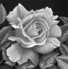 Rose study by StephenAinsworth.deviantart.com on @deviantART