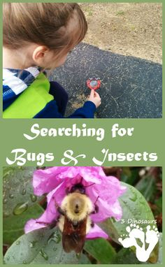 Searching for Bugs & Insects - 3Dinosaurs.com