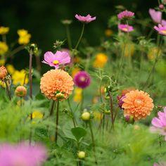 Fionnuala Fallon's ode to late summer splendour. Fall Winter, Autumn, Late Summer, Heaven, Rainbow, Magazine, Nature, Plants, Gardens