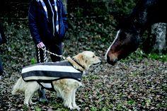 Newmarket stripe Horseware dog rug.