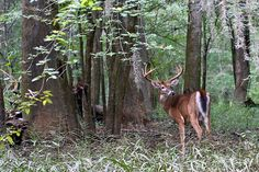 Congaree National Park Animals | Recent Photos The Commons Getty Collection Galleries World Map App ...