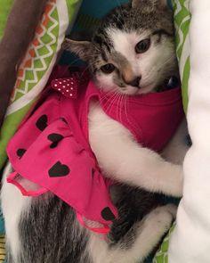 Abril de 2016 alistándome para viajar a mi nuevo hogar en Bogotá conoceré por fin a #amigo  #cat #catrescue #catlover #kittens #animal #love