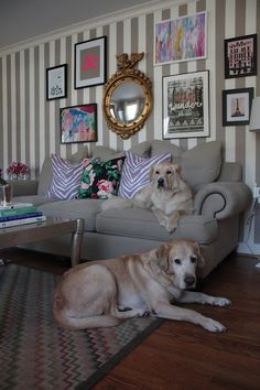 the striped wall and the sweet yellow lab, please