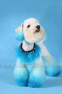 creative dog grooming school in Thailand...... Starwood