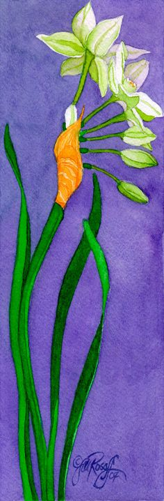 Narcissus paperwhite single stem original by RosoffArtworks