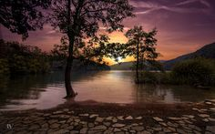 Photo Purple by Rolando Felizola on 500px