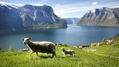 Sheeps, mountains and fjords