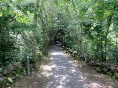 Path to the Ecoforest