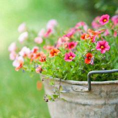 Ihanat värit, puutarha, kukkaistutus