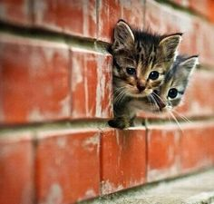 Cute kitten alert! They always get me every time! #photography #cats #animals