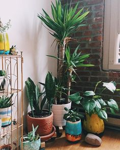This corner of the loft makes me really happy. #jungalowstyle - plants