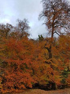 Spylaw park, Edinburgh