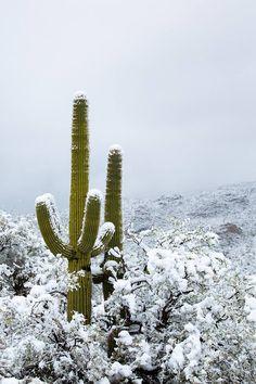 Robert Scott   Saguaro National Park Snow In Arizona, Arizona Winter, Joshua Tree National Park, National Parks, Winslow Arizona, Desert Location, Robert Scott, Cityscapes, Antelope Canyon