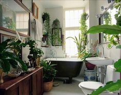 Grönskönt inomhus