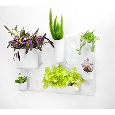 Urbio Big Happy Family Wall Organizer/Planter -- I am in LOVE with this!! Easy way to grow herbs indoor.