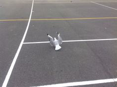 Seagulls come around when rubbish is on the ground