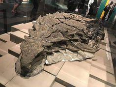 (99+) Tumblr National Geographic, Archaeological Discoveries, Archaeological Finds, Carnivore, Recent Discoveries, Dinosaur Fossils, Prehistoric Creatures, Prehistoric Dinosaurs, Museum Exhibition