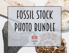 Fossil Bundle - This beautiful set of photos features some amazing fossils. Check out this TpT store for some fantastic professional quality pictures of a range of subjects to support the classroom or blogs and products. Picture are added almost daily so this a great store to follow.