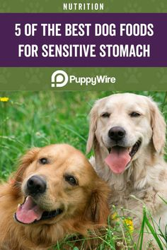 Does your dog have a sensitive stomach? This article covers the top 5 picks for the best dog food for sensitive stomachs. Dog Dental Care, Dog Care, Funny Dog Videos, Funny Dogs, All Dogs, Best Dogs, Dog Barking Video, Cute Puppies, Cute Dogs