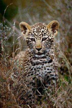 Young Leopard Princess