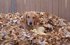 Remember Moldy Leaves Can Harm Your Pet So Rake 'Em & Bag Them Same Day
